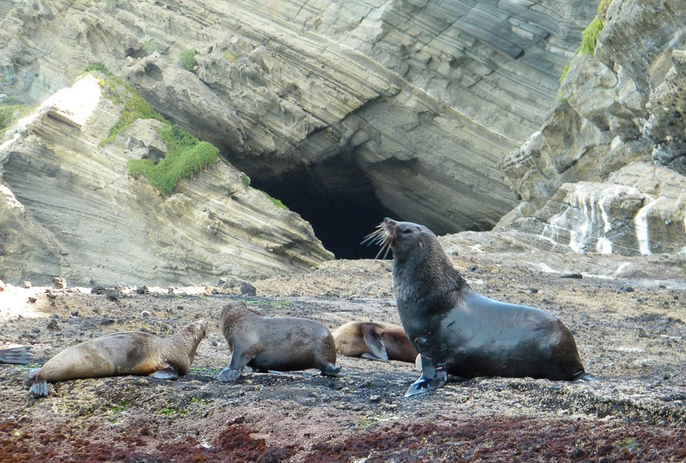 Seals by Sea Tours, Cape Bridgewater